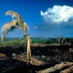 Деградація природи та екологічні проблеми презентація