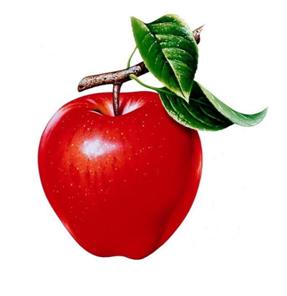 Загадки про яблуко для дітей