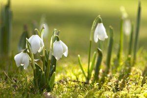 Загадки про весну українською